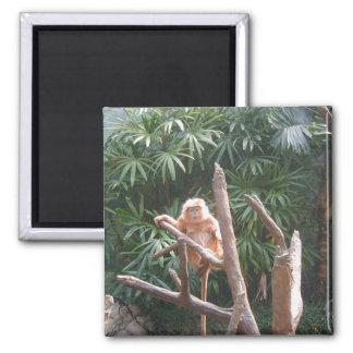 Mono lindo de Brown en el árbol Iman Para Frigorífico