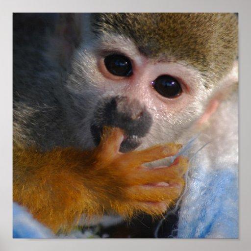 Mono lindo del bebé posters
