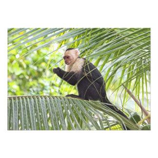 Mono lindo en una palmera
