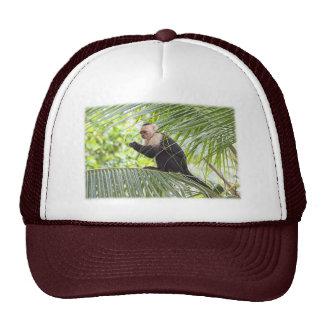 Mono lindo en una palmera gorro