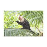 Mono lindo en una palmera lona envuelta para galerías