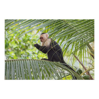 Mono lindo en una palmera impresiones