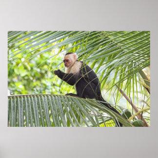 Mono lindo en una palmera poster