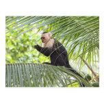 Mono lindo en una palmera postal