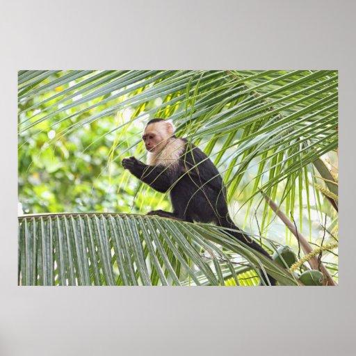 Mono lindo en una palmera póster