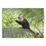 Mono lindo en una palmera tarjeta de felicitación