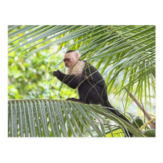 Mono lindo en una palmera tarjetas postales