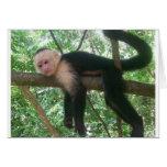 Mono lindo tarjeta