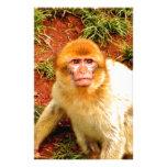 mono lindo y curioso papelería de diseño