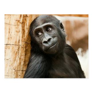 Mono negro del bebé tarjetas postales