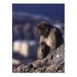 Mono pensativo en Gibraltar Postales
