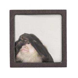 Mono que cubre sus ojos caja de recuerdo de calidad