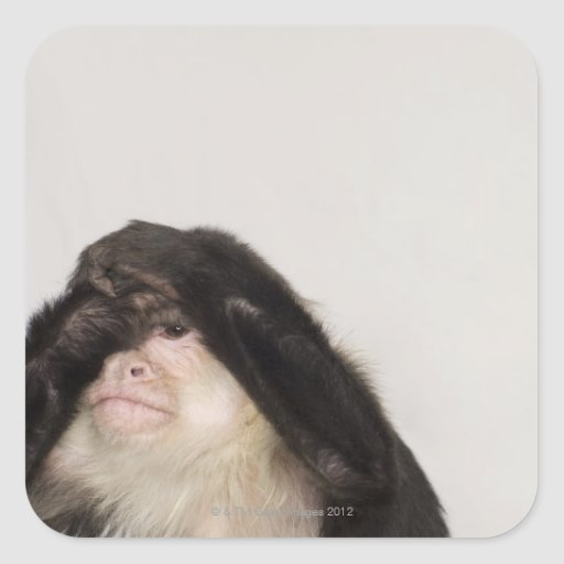 Mono que cubre sus ojos calcomanías cuadradases