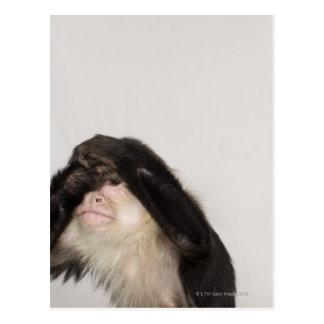 Mono que cubre sus ojos tarjetas postales