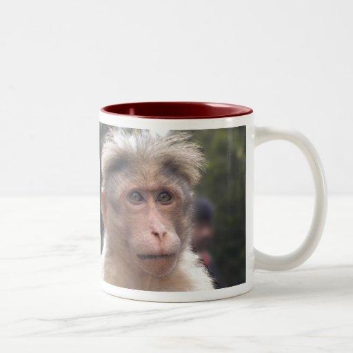 Mono que mira la taza