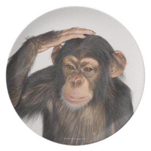 Mono que rasguña su cabeza plato para fiesta