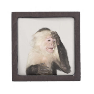 Mono que se rasguña caja de recuerdo de calidad
