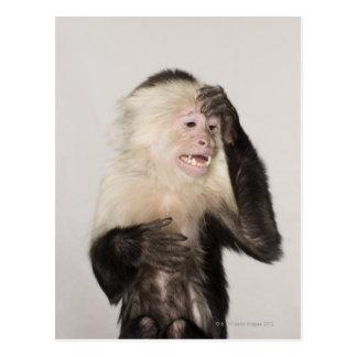 Mono que se rasguña postal