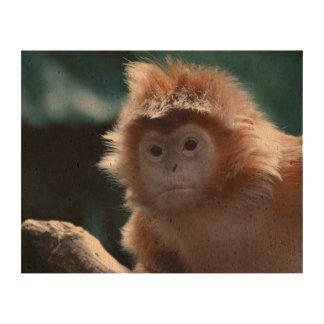 Mono rojo lindo del Langur Impresiones En Corcho