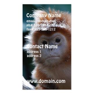 Mono rojo lindo del Langur Tarjetas De Visita
