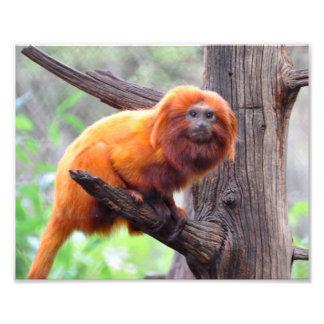 Mono rojo solo de la hoja impresión fotográfica