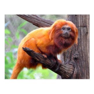Mono rojo solo de la hoja tarjetas postales