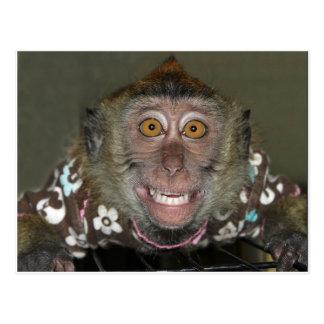 Mono sonriente tarjetas postales