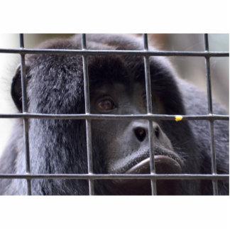 mono triste en imagen del primate de la jaula esculturas fotográficas