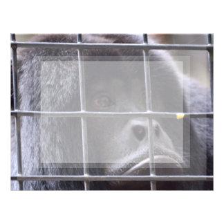 mono triste en imagen del primate de la jaula plantillas de membrete