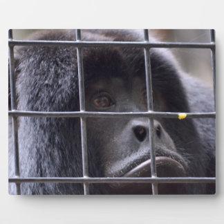 mono triste en imagen del primate de la jaula placas con foto