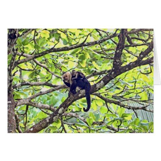 Mono y bebé de la madre en selva felicitación