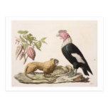 Mono y cóndor de león, nativos a Chile o a Ecuador Tarjeta Postal