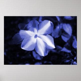 Monochromatic Blue Flower Poster
