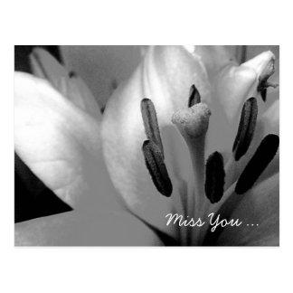 Monochrome Lily Abstract Bold Stamen Postcard