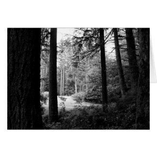 Monochrome Sunlit Hidden Meadow Card