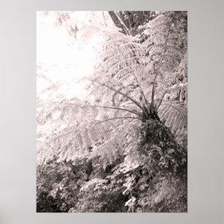 Monochrome Tree Fern Poster