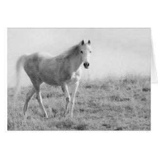 Monochrome white horse card