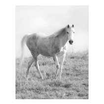 Monochrome white horse flyer