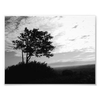 Monocromo de la silueta del árbol cojinete