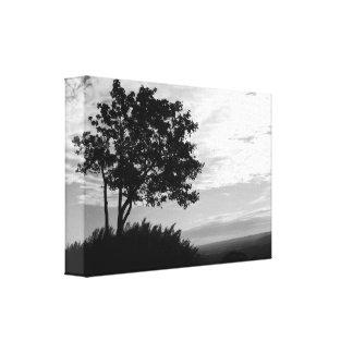 Monocromo de la silueta del árbol lona envuelta para galerías