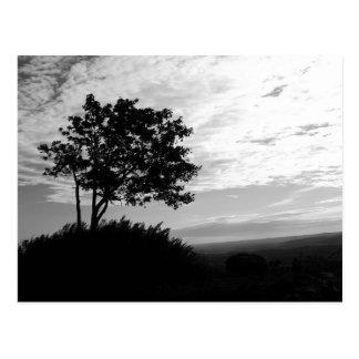 Monocromo de la silueta del árbol tarjetas postales