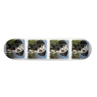 Monopatín de Dalmation Patines Personalizados