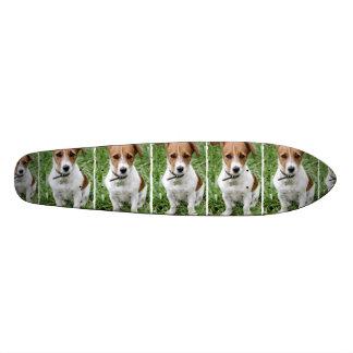 Monopatín de Jack Russell Terrier Patines