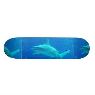 Monopatín de la natación del tiburón