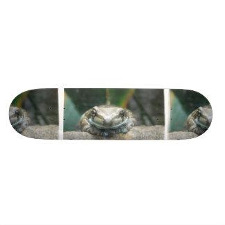 Monopatín de la rana de la leche del Amazonas