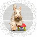 Monopatín de trigo de Terrier del escocés Esculturas Fotográficas