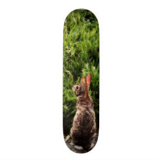 Monopatín del conejito