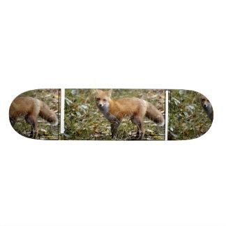 Monopatín del Fox Patines Personalizados