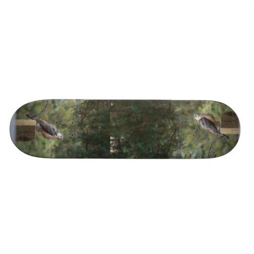 Monopatín del halcón del tonelero tabla de patinar