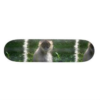 Monopatín del mono de araña